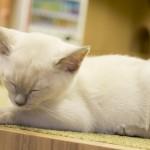 20160627僕と猫。 秋葉原店 (51)