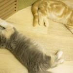 20160627僕と猫。 秋葉原店 (50)