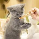 20160627僕と猫。 秋葉原店 (31)