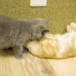 20160627僕と猫。 秋葉原店 (16)