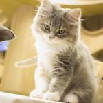 20160627僕と猫。 秋葉原店 (34)