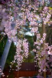 こんな暖かい花見シーズンは久しぶり…