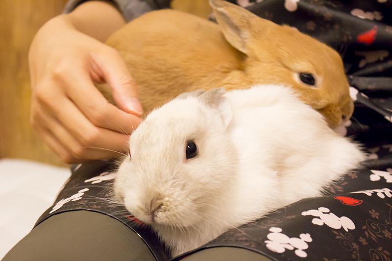 ▲ウサギ「!」