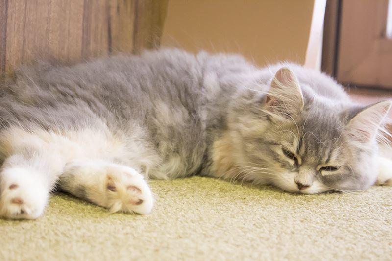▲リラックスしてる猫を見て癒されるも良し。