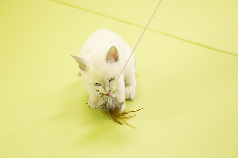 ▲速攻HIT。小さい子猫とはいえ、動きは素早い。