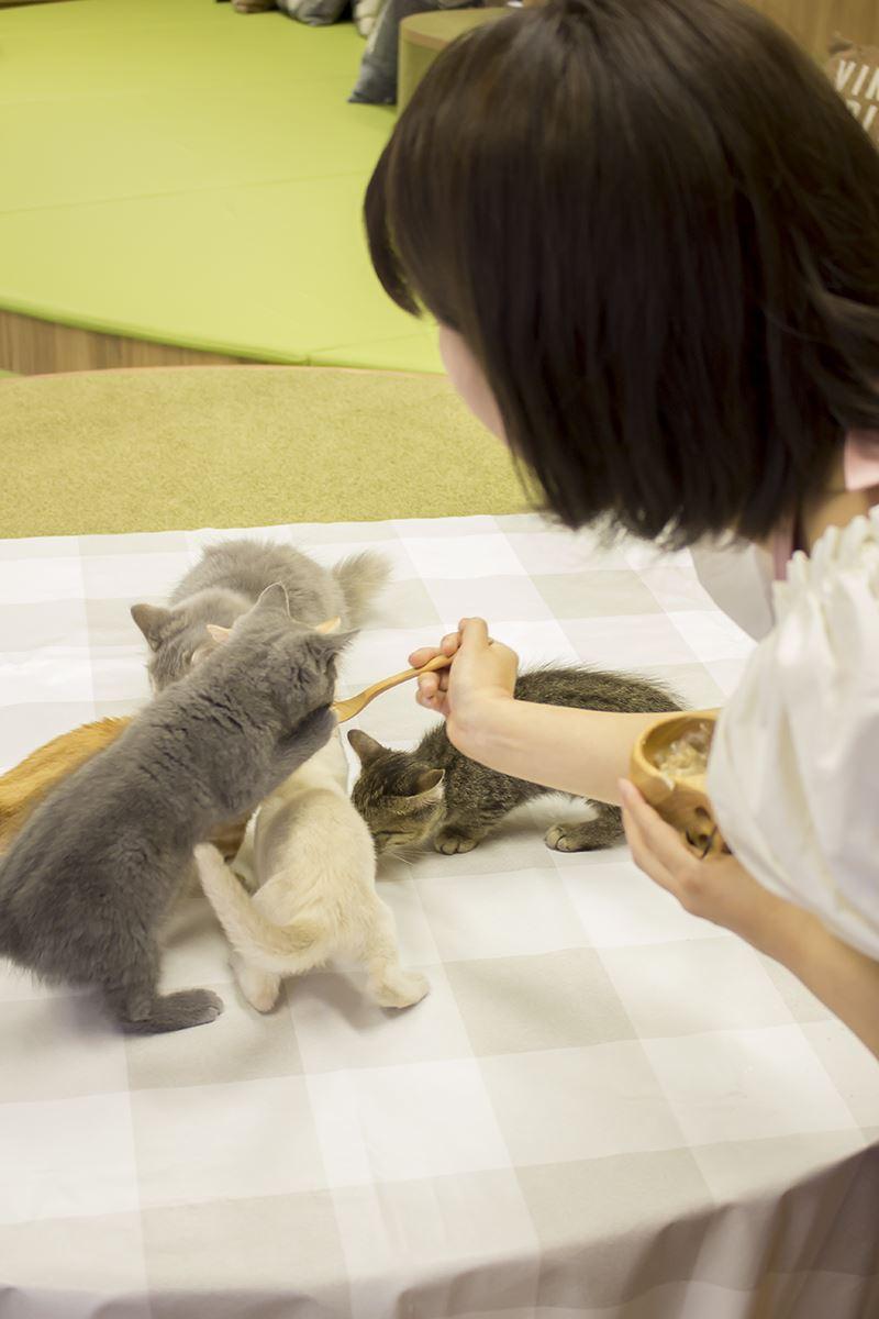 20160627僕と猫。 秋葉原店 (30)