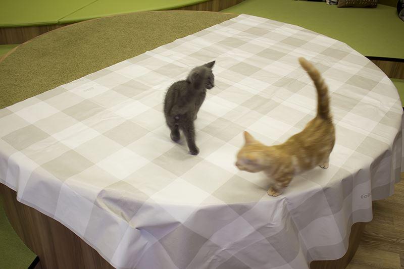 ▲500円で「おやつ」を購入。専用のシートを広げると、猫たちがソワソワする。