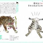 恋するいきもの図鑑29ジャガー
