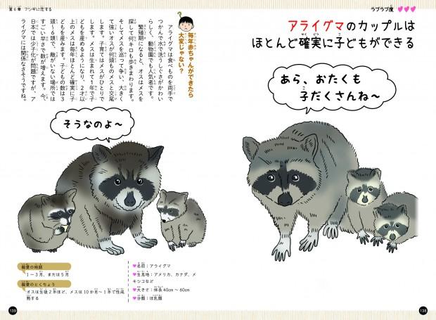 恋するいきもの図鑑70アライグマ