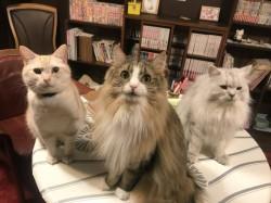 「cat cafe nyanny AKIBA」が8月19日をもって閉店する